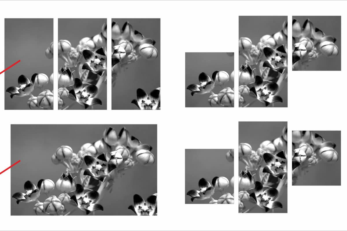 one zoom shot of flowers broken up in three tiles in three different ways for creating canvas printed photo frames